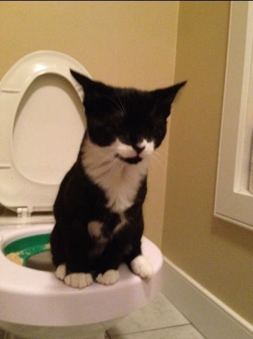Tuxedo cat learning how to use toilet