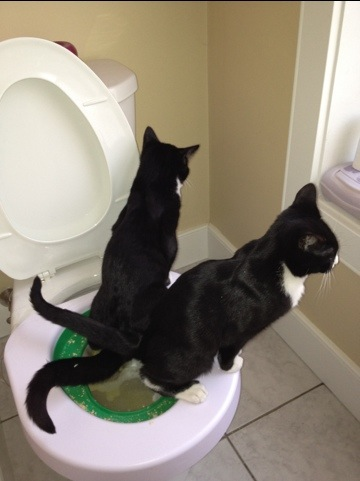 Two cats learning how to use the toilet