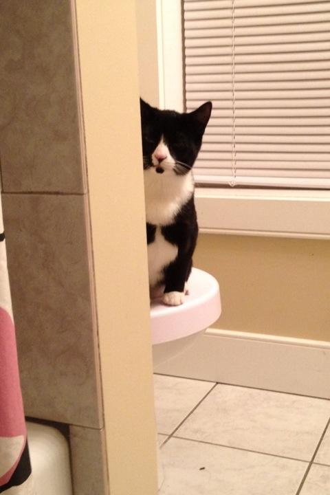 Tuxedo cat peeks around shower wall while using toliet