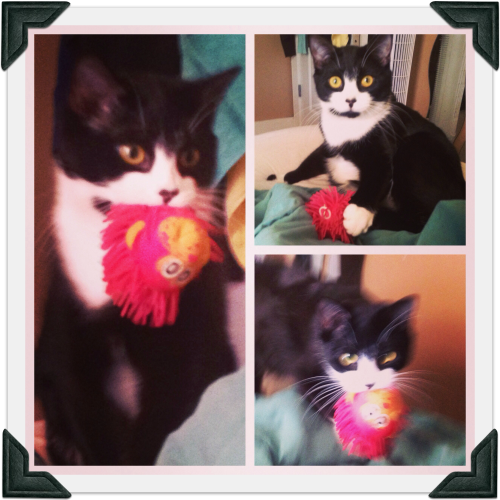 Collage of images of tuxedo cat playing with pink monkey head cat toy