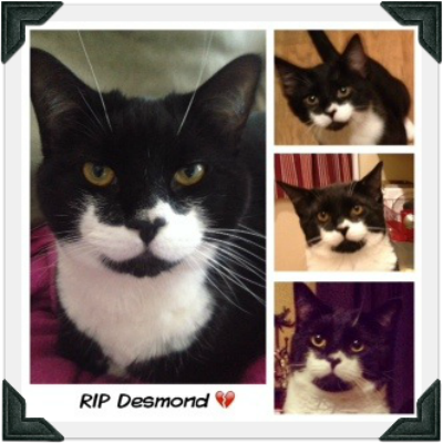 "Collage of photos of tuxedo cat. Text reads ""RIP Desmond"""