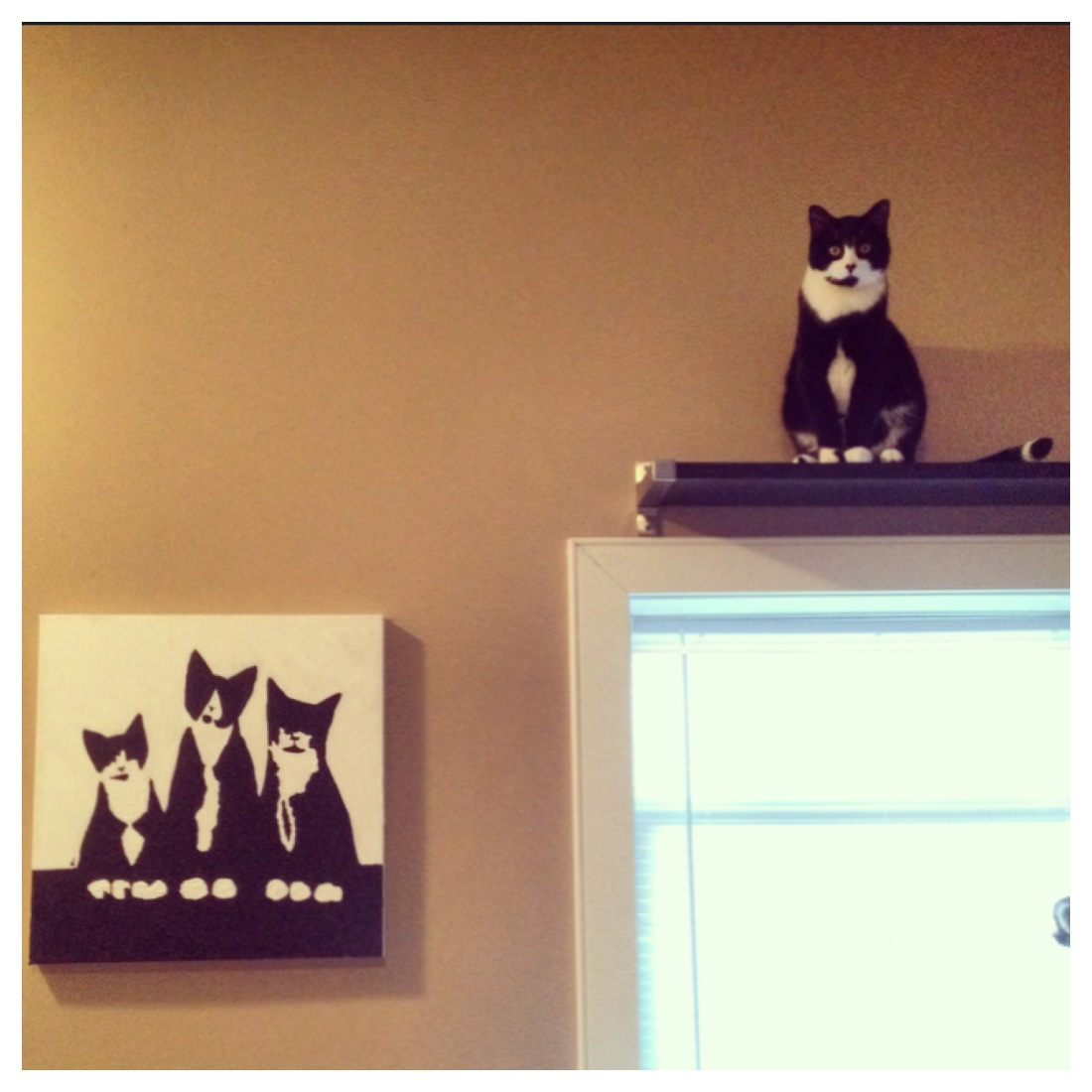 Tuxedo cat painting hanging next to shelf with cat sitting on it