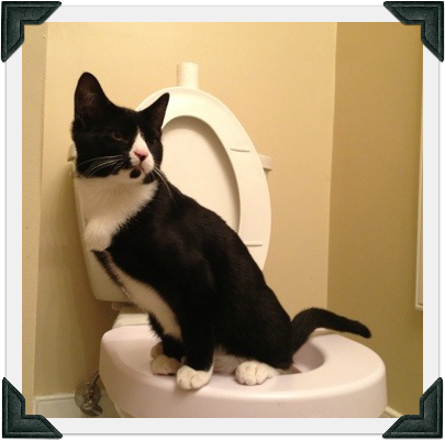 Tuxedo cat on toilet