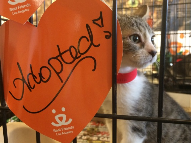 "Kitten in cage sits next to sign that reads ""Adopted!"""