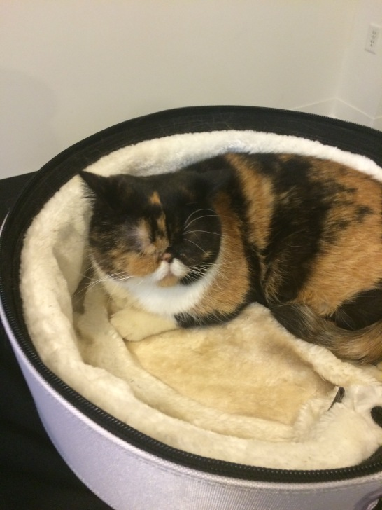 Pudge the cat sleeps in her bed