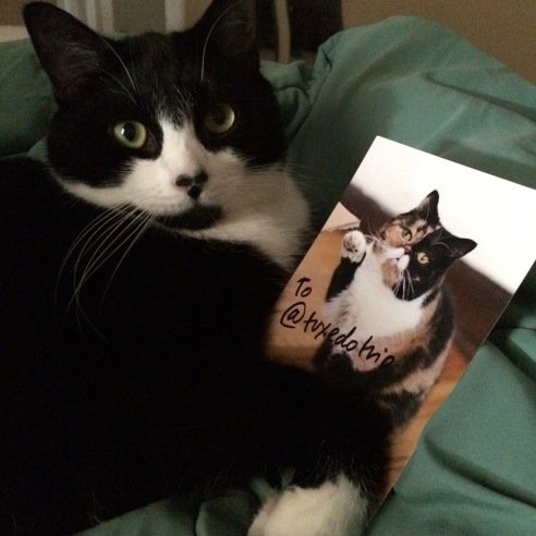 "Tuxedo cat poses with autographed photo of Pudge the cat. Text reads ""To @tuxedotrio"""