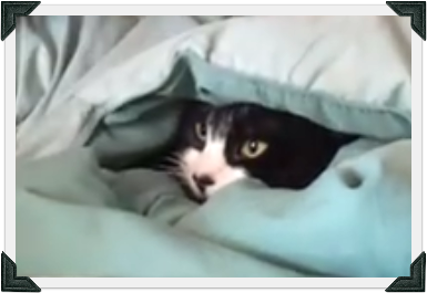 Tuxedo cat hides underneath blanket