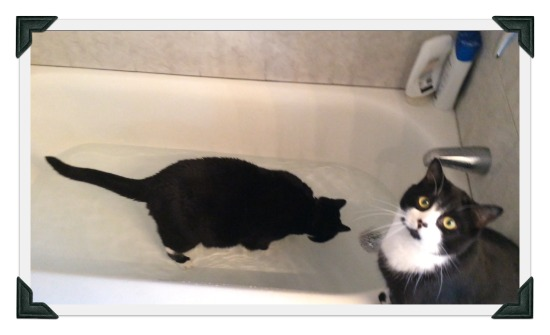 Tuxedo cat plays in bathtub filled with water while other cat looks on