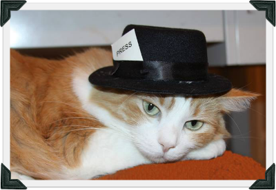 "Orange and white cat wearing hat and that reads ""PRESS"" rests head on paw"