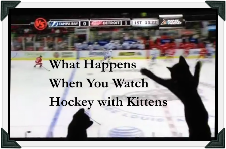 "Image of video thumbnail for ""What Happens When You Watch Hockey with Kittens"""