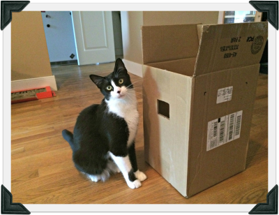 Tuxedo cat stands next to large cardboard box