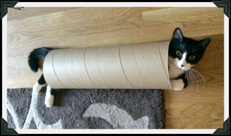 Tuxedo kitten inside cardboard tube