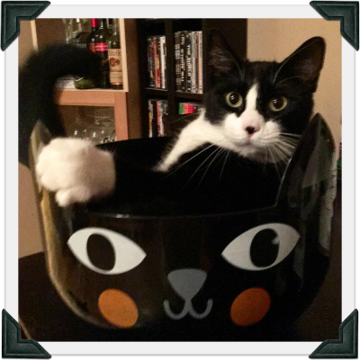 Tuxedo cat sits in a tuxedo cat bowl