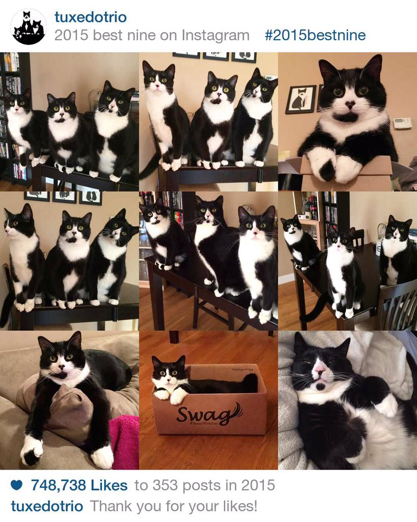 Collage shows 9 images of tuxedo cats