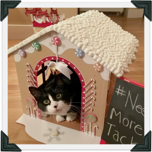 Tuxedo cat peers out of homemade gingerbread house
