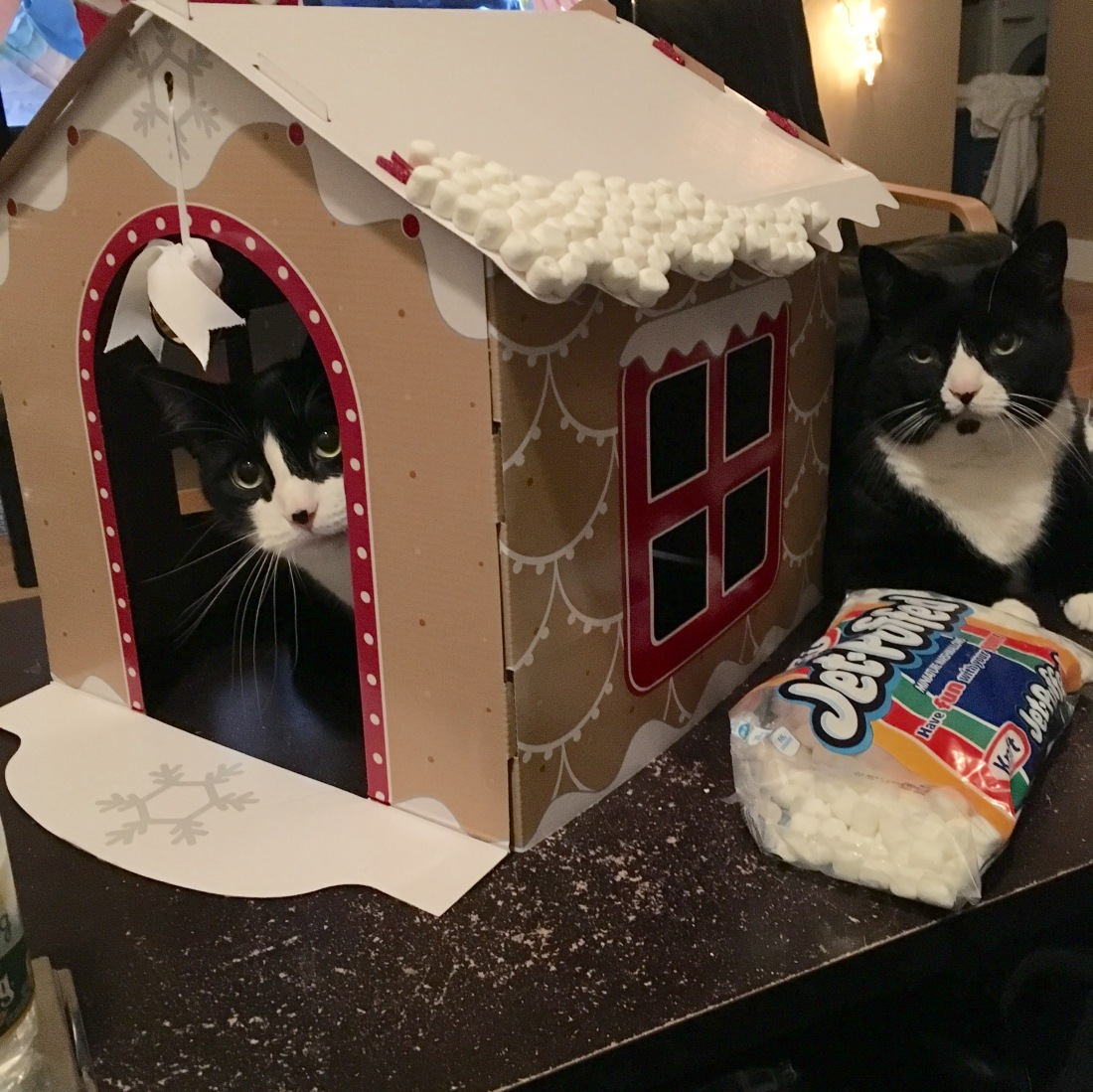 Tuxedo cats pose with gingerbread house