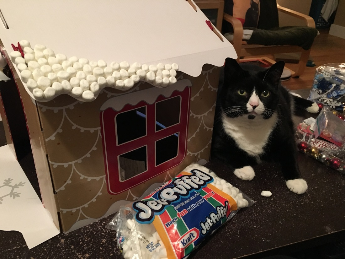 Tuxedo cat poses with cardboard house and partially covered marshmallow roof