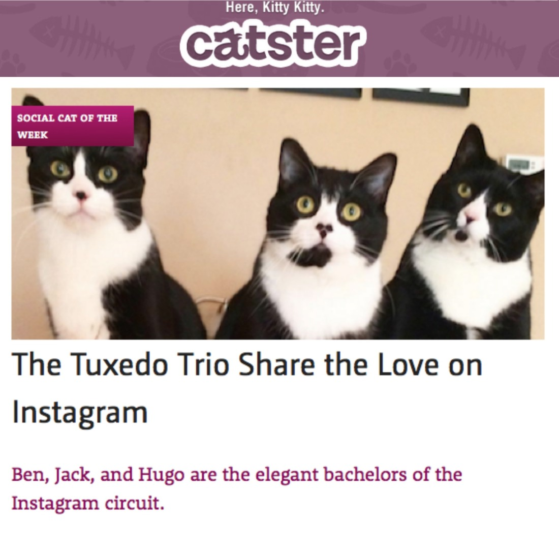 "Article from Catster featuring TuxedoTrio. Text reads ""The Tuxedo Trio Share the Love on Instagram: Ben, Jack, and Hugo are the elegant bachelors of the Instagram circuit."""