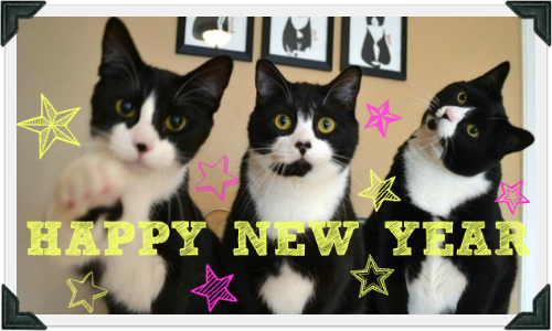 "Three tuxedo cats pose for a photo. Text reads ""HAPPY NEW YEAR"""