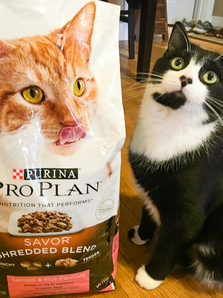 Cat sits next to bag of Purina Pro Plan cat food