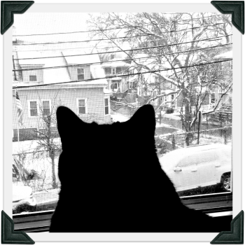 Cat looks outside window at snowy scene