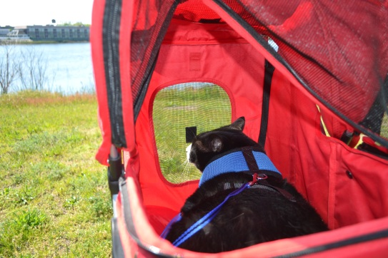 Cat sitting inside a stroller