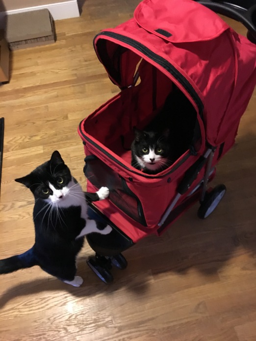 Cat sits inside stroller while another cat peers in