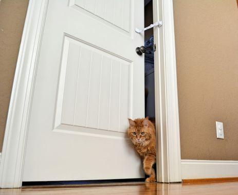 Photo of cat walking through door with Door Buddy