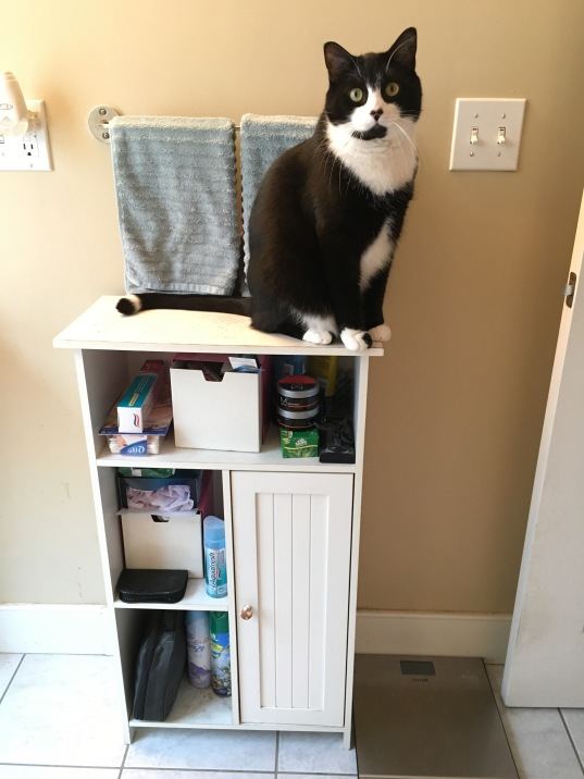 Cat sitting on top of cluttered, white cabinet