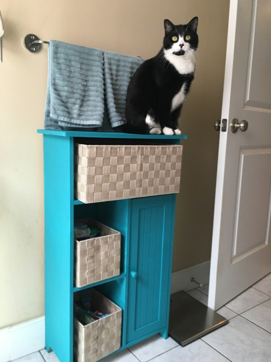 Tuxedo cat sitting on top of finished cabinet
