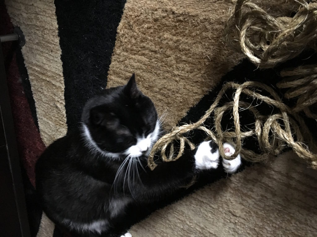 Cat playing with rope.