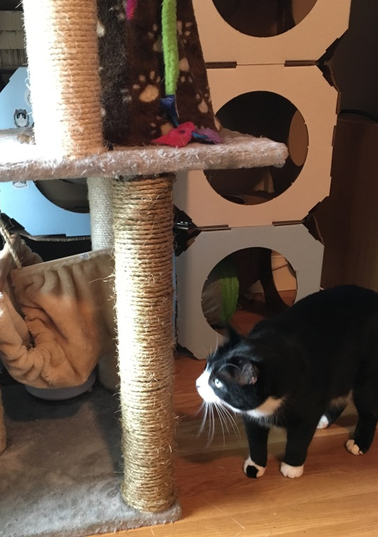Photo shows cat looking at repaired cat tree.