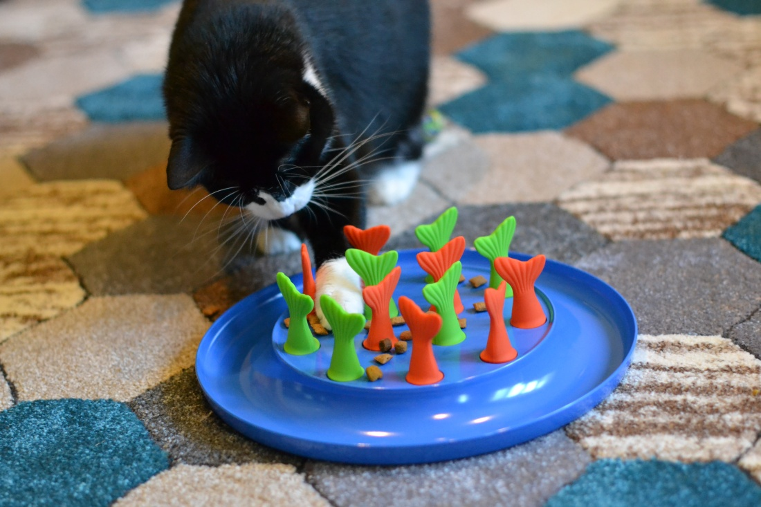 Cat paws at kibble in feeder toy.