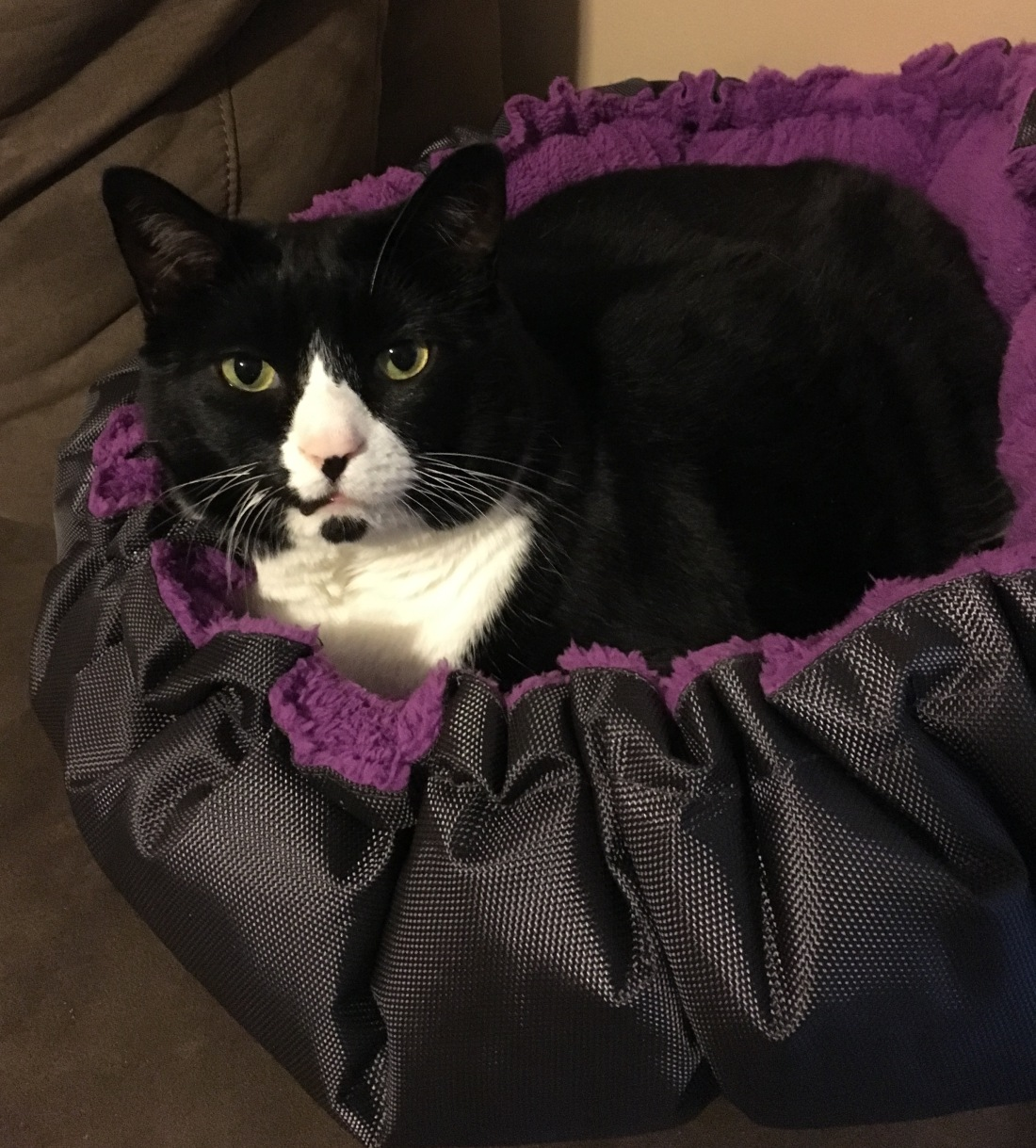 Cat sitting in cat bed