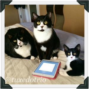 Three tuxedo cats sit in front of an ipad